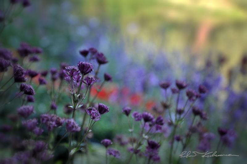 Kompozycje kwiatowe w ogrodzie