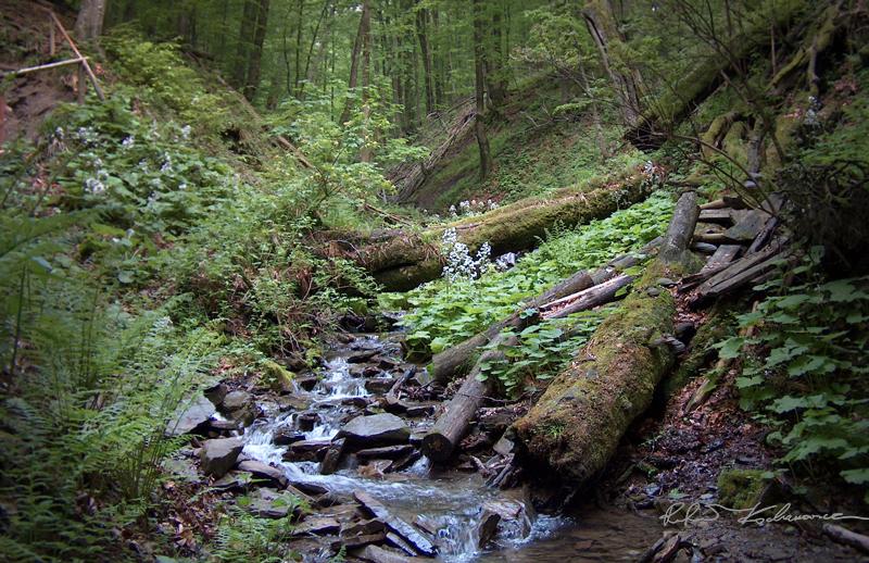 Inspiracja dla ogrodu skalnego